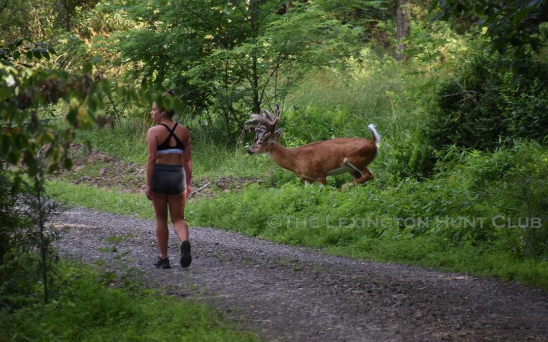 Buck Crossing!